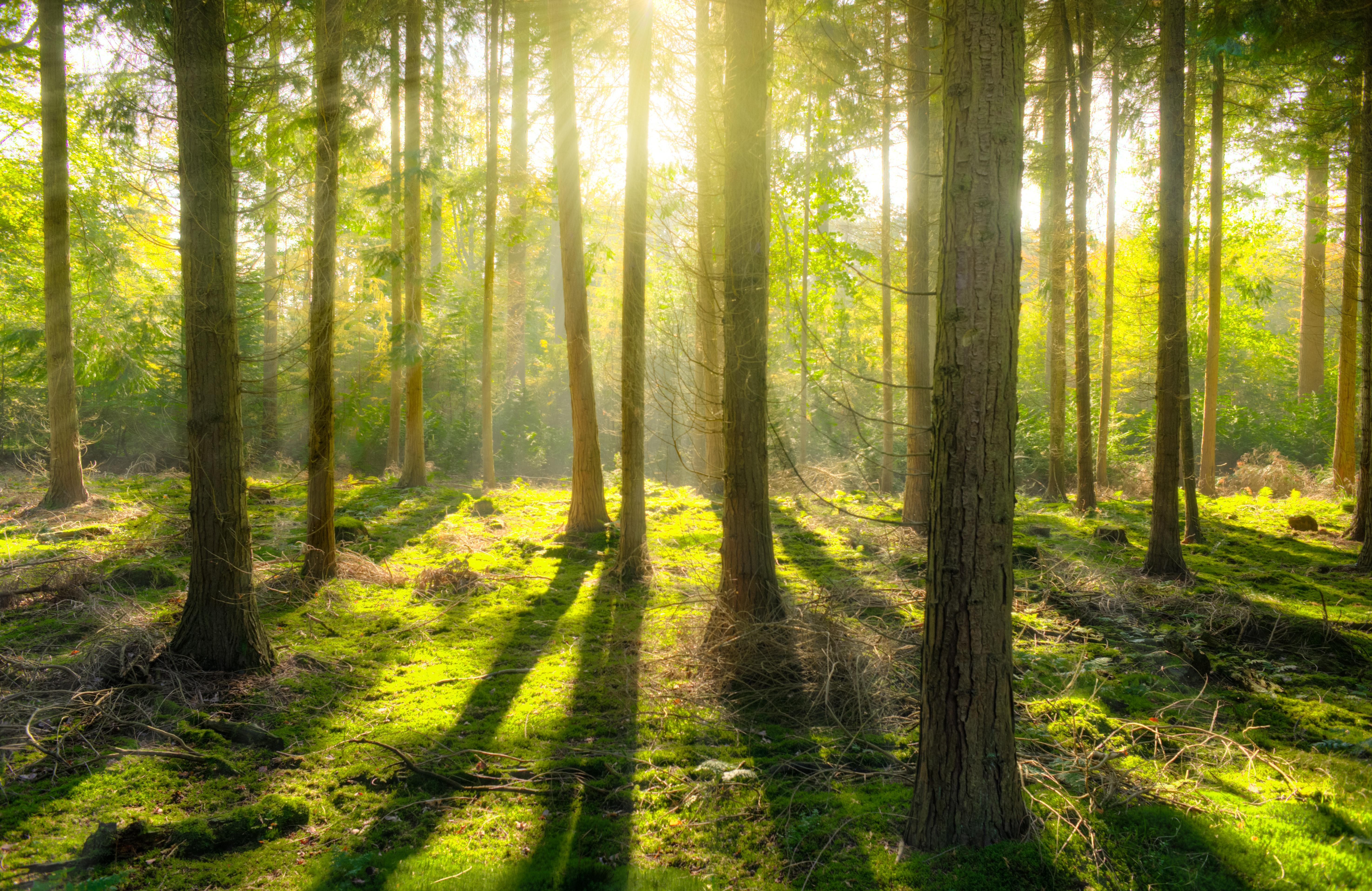 Brak wykonywania obowiązków z zakresu gospodarki leśnej przez właściciela lasu prywatnego - zdjęcie
